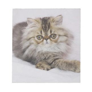 Persian Cat, Felis catus, Brown Tabby, Kitten, Notepad