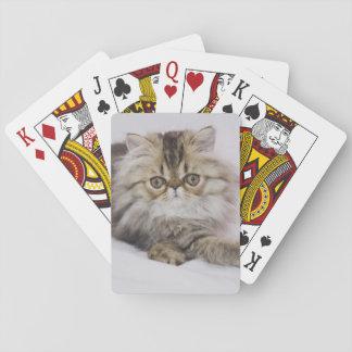 Persian Cat, Felis catus, Brown Tabby, Kitten, Playing Cards