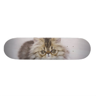 Persian Cat Felis catus Brown Tabby Kitten Skateboard Deck