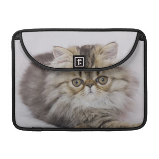 Persian Cat, Felis catus, Brown Tabby, Kitten, Sleeve For MacBooks