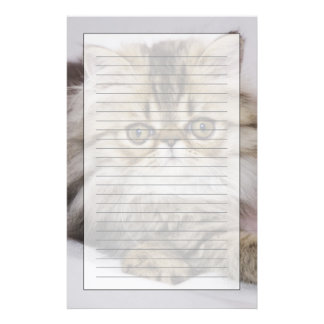 Persian Cat, Felis catus, Brown Tabby, Kitten, Stationery