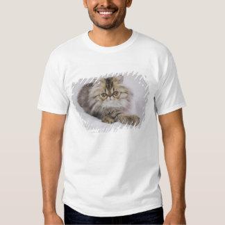 Persian Cat, Felis catus, Brown Tabby, Kitten, Tee Shirt