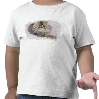 Persian Cat, Felis catus, Brown Tabby, Kitten, Tee Shirts