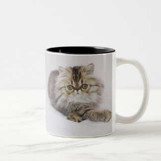 Persian Cat, Felis catus, Brown Tabby, Kitten, Two-Tone Coffee Mug
