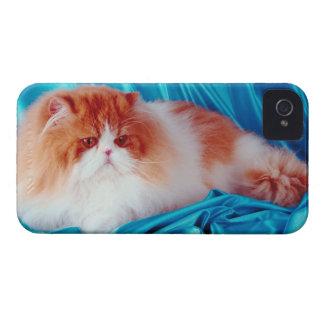 Persian cat iPhone 4 cover
