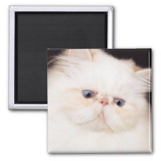 PERSIAN CAT MAGNET 2 INCH SQUARE MAGNET