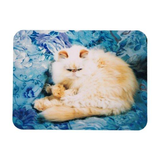 Persian Cat Photo Magnet