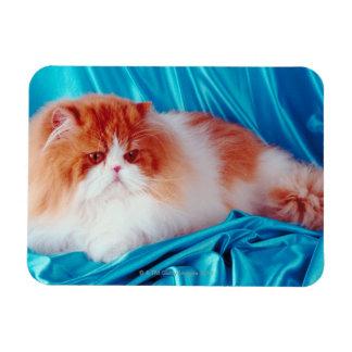 Persian cat rectangular photo magnet