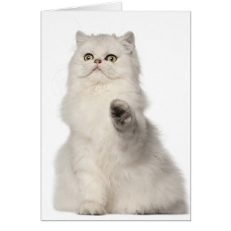 Persian cat sitting card