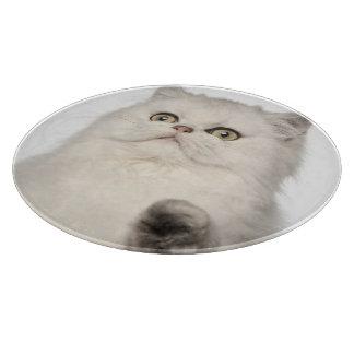 Persian cat sitting cutting board