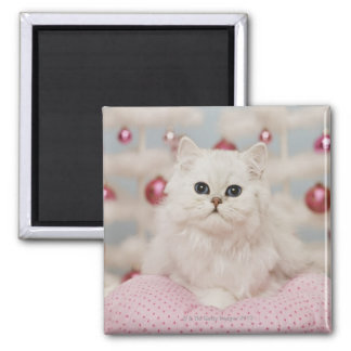 Persian cat sitting on pink pillow square magnet