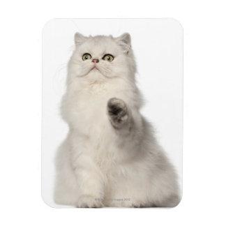 Persian cat sitting rectangular photo magnet