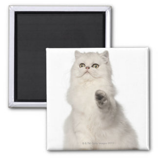 Persian cat sitting square magnet
