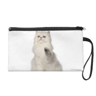 Persian cat sitting wristlet