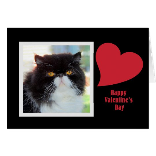 Persian Cat Valentine Card