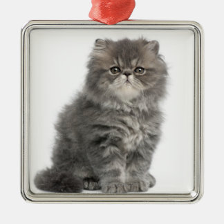 Persian Kitten (2 months old) sitting Christmas Ornament