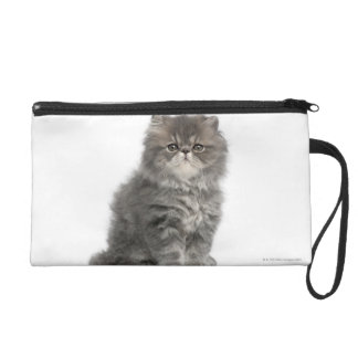 Persian Kitten (2 months old) sitting Wristlet
