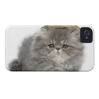 Persian Kitten (2 months old) wearing a straw iPhone 4 Case-Mate Case