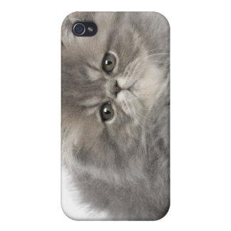 Persian Kitten (2 months old) wearing a straw iPhone 4 Cover