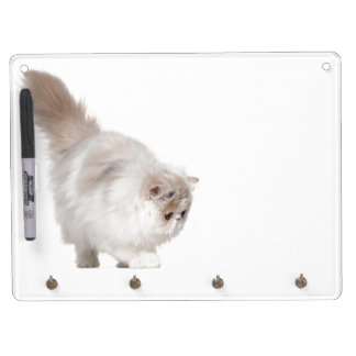 Persian kitten (3 months old) dry erase board with key ring holder