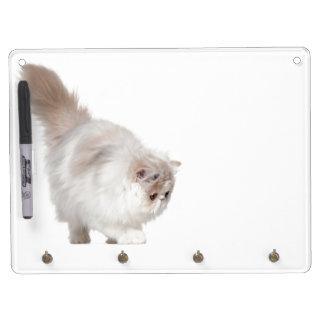 Persian kitten (3 months old) dry erase whiteboard