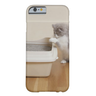Persian Kitten looking at litter box Barely There iPhone 6 Case