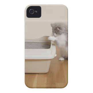 Persian Kitten looking at litter box iPhone 4 Covers