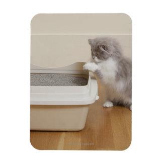 Persian Kitten looking at litter box Rectangular Photo Magnet