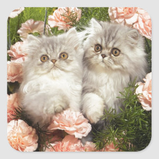 Persian Kittens Play in Pink Flowers Square Sticker