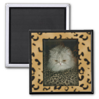 Persian Kitty Square Magnet