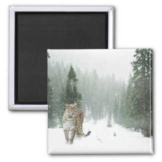 Persian Snow Leopard Square Magnet