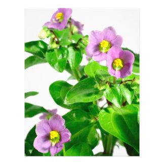 Persian violets full color flyer