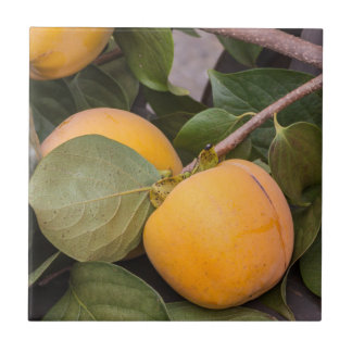 persimmons in autumn tile