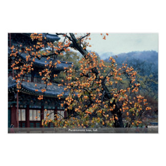 Persimmons tree, fall poster