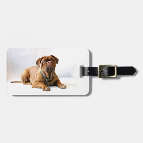 Personalised Mastiff / Dog Photo Luggage Tag