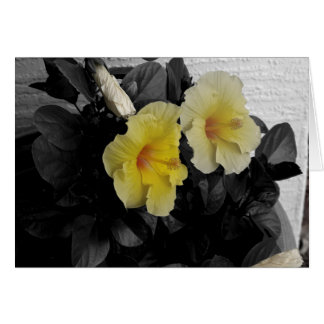 Personalised Yellow Hibiscus selective colour Card