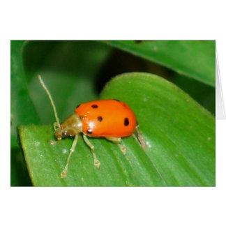 personalizable orange beetle greeting card