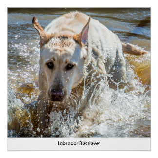 Personalize:  Yellow Labrador Pet Photography