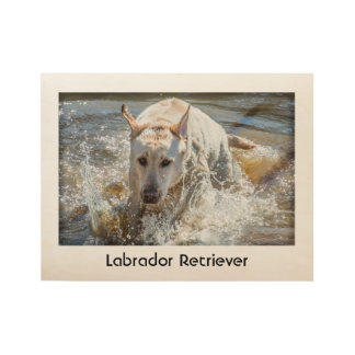 Personalize:  Yellow Labrador Pet Photography Wood Poster