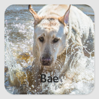 Personalize:  Yellow Labrador Photo Framed Square Sticker