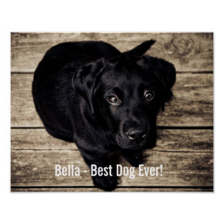 Personalized Black Lab Dog Photo and Dog Name Poster