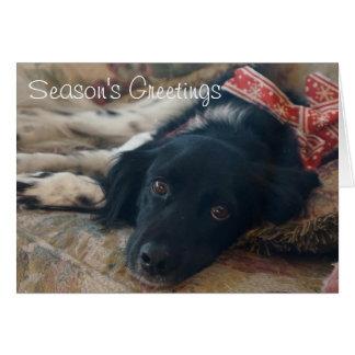 Personalized Brittany Dog Holiday Notecard xmas Greeting Card