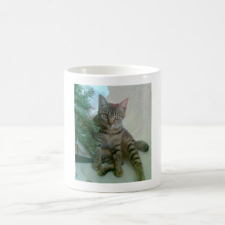 Personalized cute cat mugs