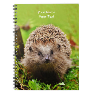 Personalized Little Hedgehog in the Forest Notebooks
