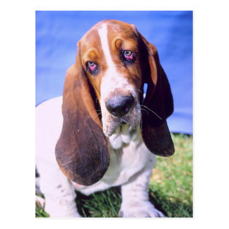 Personalized- Postcard: Lonely Basset Hound Postcard