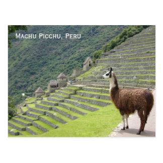 peru llama postcard