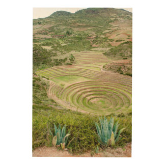 Peru, Moray. Moray Incan Agricultural Laboratory Wood Canvases