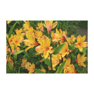 Peruvian Lily Flowers Canvas Print