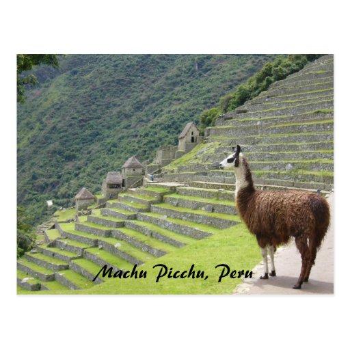 peruvian llama postcard