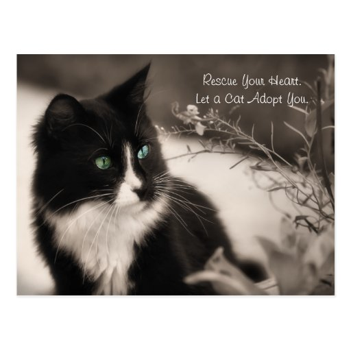 Pet Adoption Rescue Your Heart And Adopt A Cat Post Cards